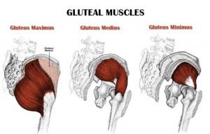 Gluteusspieren